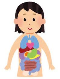腸の機能低下と、腸を動かす自律神経の乱れです。